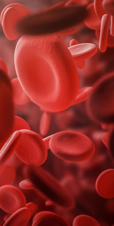 rote Blutkörper